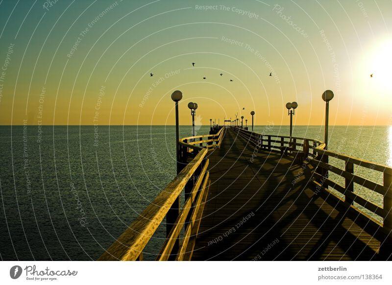 Sonnenaufgang Seebrücke Binz Meer Horizont Ferne Aussicht Wasseroberfläche Morgen Vogel Meeresvogel Möwe Ferien & Urlaub & Reisen Sommer Nebensaison