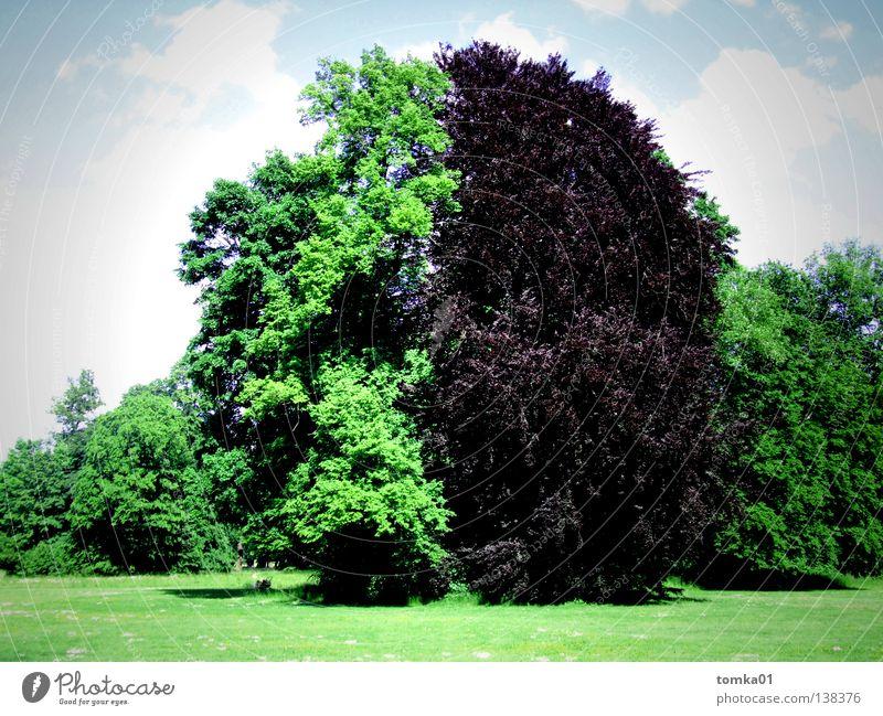 Ants-Hochzeit Baum Holz zusammenwachsen Park Wiese Blatt grün Jahreszeiten Frühling Sommer Zwilling Pflanze Wald Zusammensein verbinden Außenaufnahme Garten