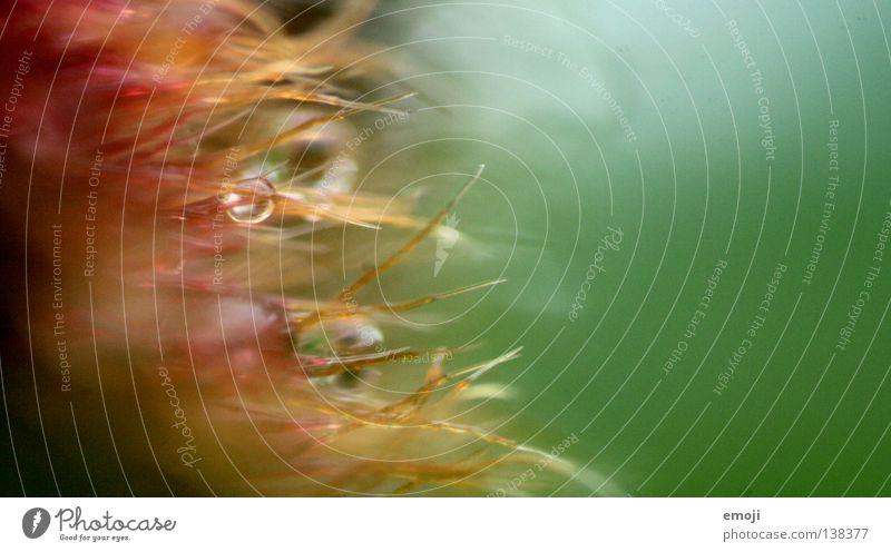 >>>> nah Makroaufnahme nass feucht Wassertropfen Regen Unschärfe rund weich seltsam Pudding Götterspeise grün Fell Fussel Nahaufnahme obskur nahfotografie