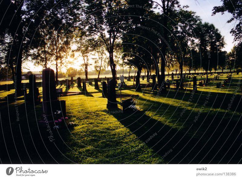 Hoffnung ruhig Sonne Himmel Horizont Baum Blume Vertrauen Sicherheit Traurigkeit Trauer Tod Ende Erwartung Ewigkeit Frieden Gesellschaft (Soziologie)