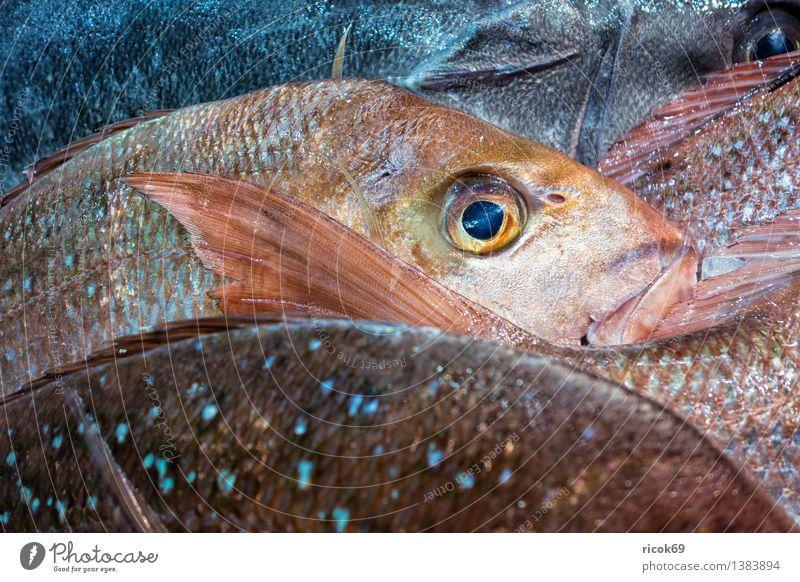 Frische Fische Natur Tier Lebensmittel frisch Ernährung genießen Kochen & Garen & Backen Küche nachhaltig verkaufen Maul Qualität Totes Tier Fischmarkt