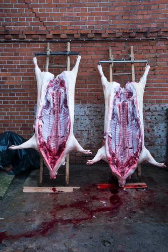 Hausschlachtung Lebensmittel Fleisch Wurstwaren Ernährung Handwerker Schlachtung Metzger Landwirtschaft Forstwirtschaft Tier Haustier Nutztier Totes Tier