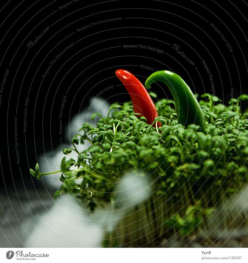 nebelwanderung Kresse grün Zwerg Baseballmütze Mütze Hut Pilzhut Kapuze gehen wandern laufen rot Nebel Nacht Abend Rauch dunkel halbdunkel schwarz Gegenteil