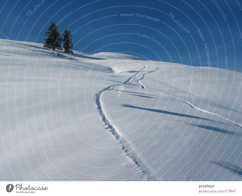 Into the snow pandemonium Loipe Tanne Berge u. Gebirge Schnee Landschaft Skifahren Himmel