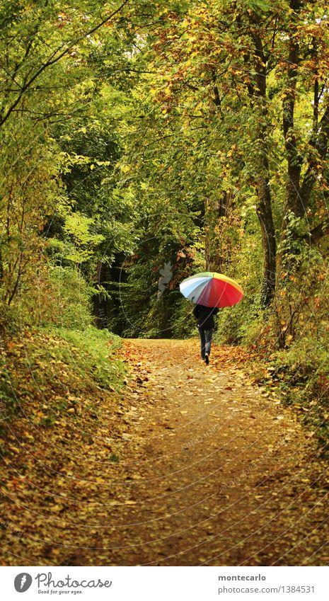 herbstspaziergang Umwelt Natur Landschaft Pflanze Urelemente Erde Herbst schlechtes Wetter Sträucher Grünpflanze Wildpflanze Blatt Baum Wald Fußweg Regenschirm