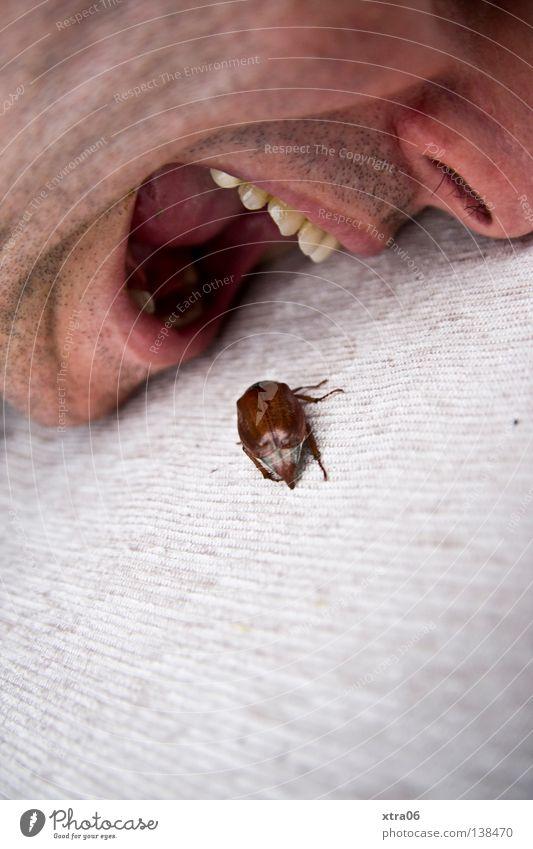die verwandlung Mensch Mann Ernährung Mund Essen Lebensmittel Nase Zähne Insekt Fleisch Fressen Käfer krabbeln Maikäfer