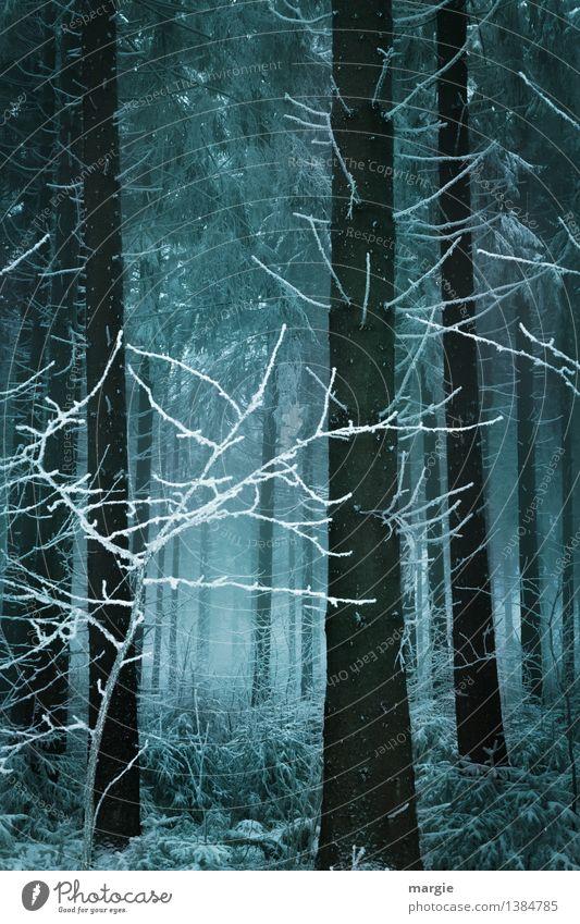 Lichtblick: Ein dunkler Winterwald mit einem Licht Ferien & Urlaub & Reisen Schnee Winterurlaub Natur Tier Erde Klima Nebel Eis Frost Schneefall Baum Wald