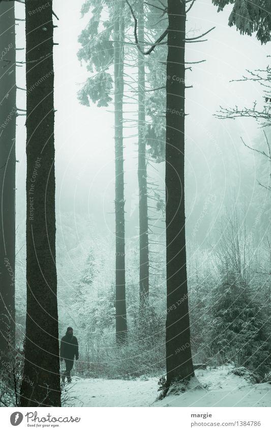 Männlein im Walde Gesundheit sportlich Erholung ruhig Meditation Ferien & Urlaub & Reisen Winter Schnee wandern Mensch maskulin 1 Umwelt Natur Landschaft Klima