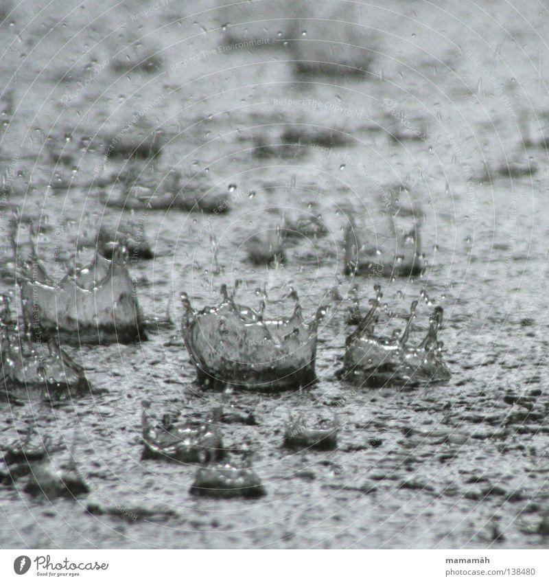 Regentropfenkronen Außenaufnahme Tag Wasser Wassertropfen Wetter schlechtes Wetter Unwetter Sturm Gewitter Hagel nass feucht spritzen Pfütze raindrops water
