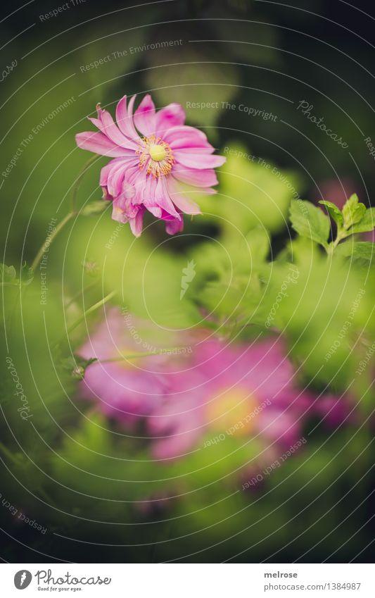 Pretty in pink Natur Pflanze grün schön Blume Landschaft Blatt Blüte Herbst natürlich Stil rosa leuchten elegant Sträucher Fröhlichkeit