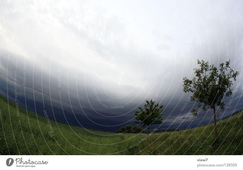 ein Sturm wird kommen... Unwetter Baum Sträucher Wiese Feld Erscheinung Regen Wind Leidenschaft Obstbaum Naturgewalt dunkel zuziehen Wolken Landwirtschaft