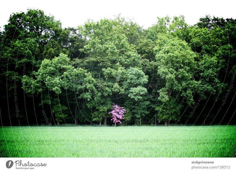 Pinker Baum (Pink Tree) obskur schön Pink (Pink) Grün (Green) Baum (Tree) Wald (Forest) Natur (Nature) Lackiert (Painted) Eingriff (Encroachment)