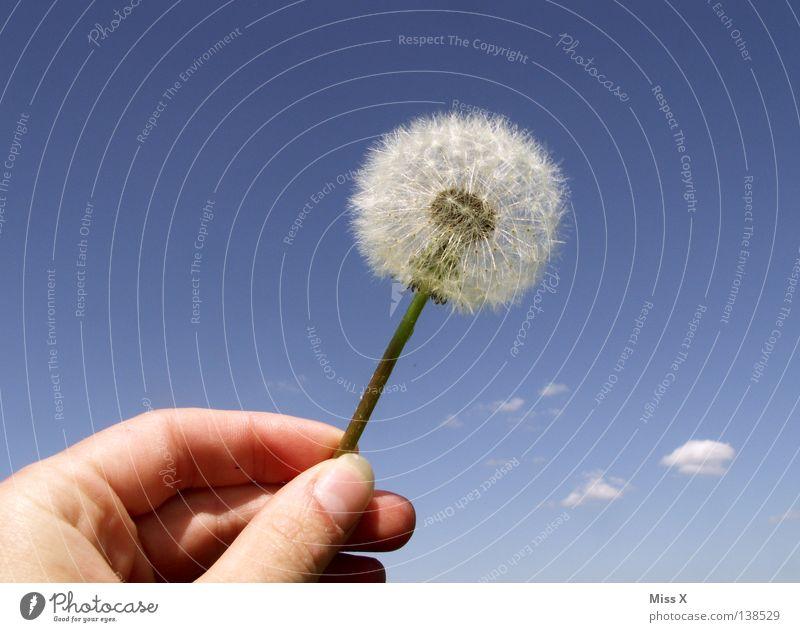 Dandylion Farbfoto Außenaufnahme Tag Sommer Luftverkehr Hand Finger Himmel Blume fliegen verblüht blau weiß Löwenzahn blasen Daumen Wolken Wolke Löwenzahn Samen