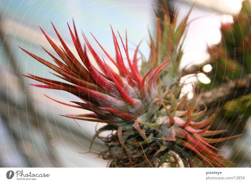 Kaktusblüte Blüte Pflanze exotisch
