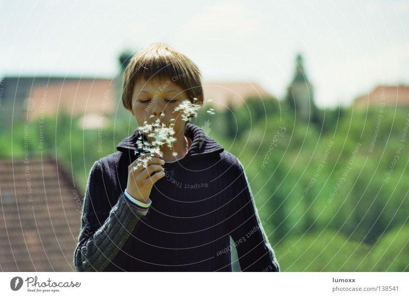 Löwenzahn 1 Kind Baum Freude Blume Junge Freiheit Bewegung Wind Geschwindigkeit Turm blasen Samen fliegend ausbreiten Bundesland Steiermark