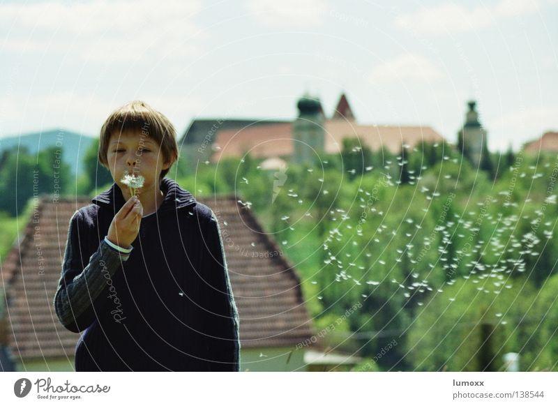 Löwenzahn II Farbfoto Außenaufnahme Tag Totale Oberkörper Freude Freiheit Haus Kind Mensch maskulin Junge Kindheit 1 8-13 Jahre Natur Wolken Frühling Wind Blume
