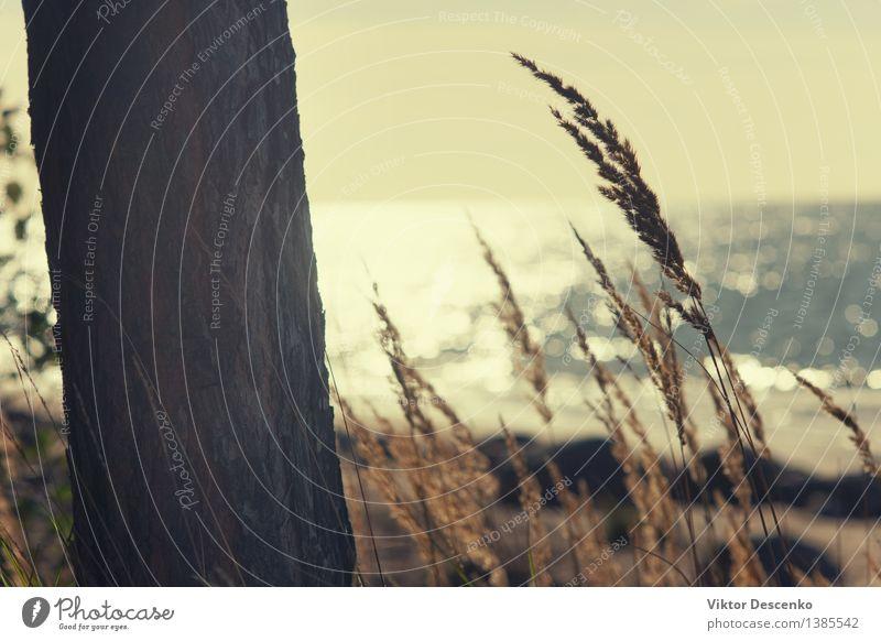 Der Stamm des Baumes und das Gras am Strand schön Ferien & Urlaub & Reisen Meer Natur Landschaft Himmel Horizont Park Küste Ostsee Skyline blau grün Wasser
