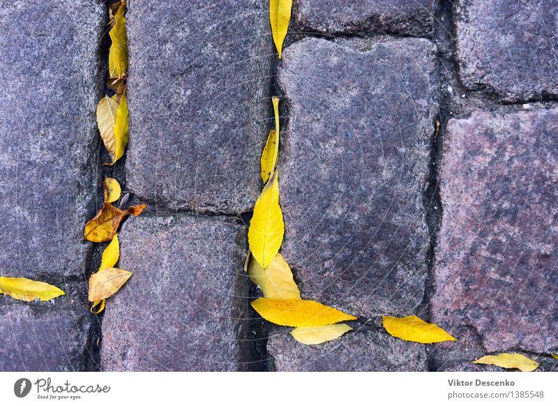 Gelbe Herbstblätter liegen zwischen den Kopfsteinen Design Menschengruppe Natur Wetter Regen Baum Blatt Park Straße alt nass gelb schwarz Farbe Ahorn