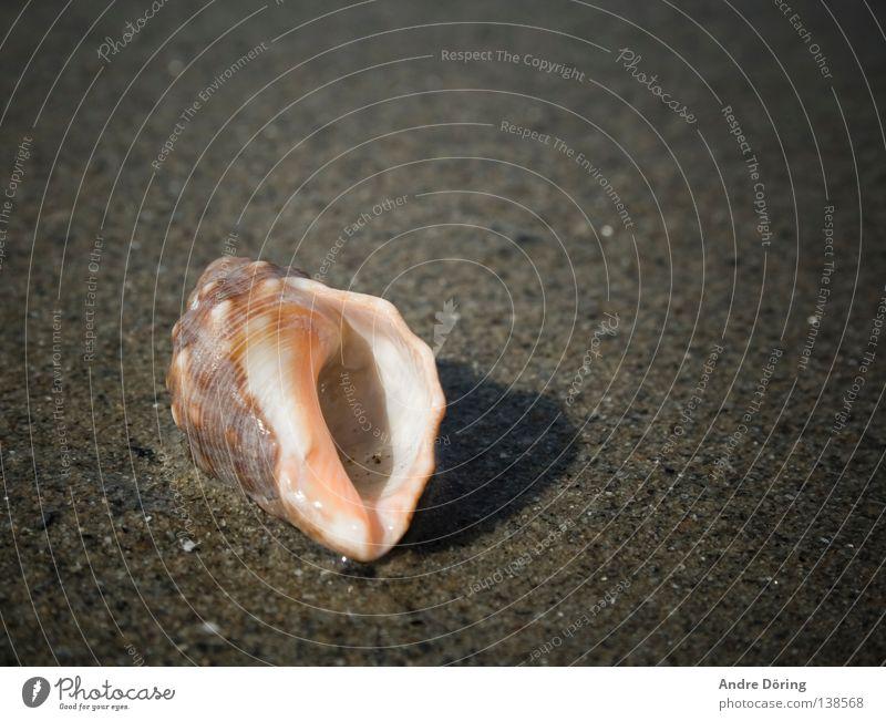 Muschel Meer Strand Haus Sand Rauschen hören Strandgut