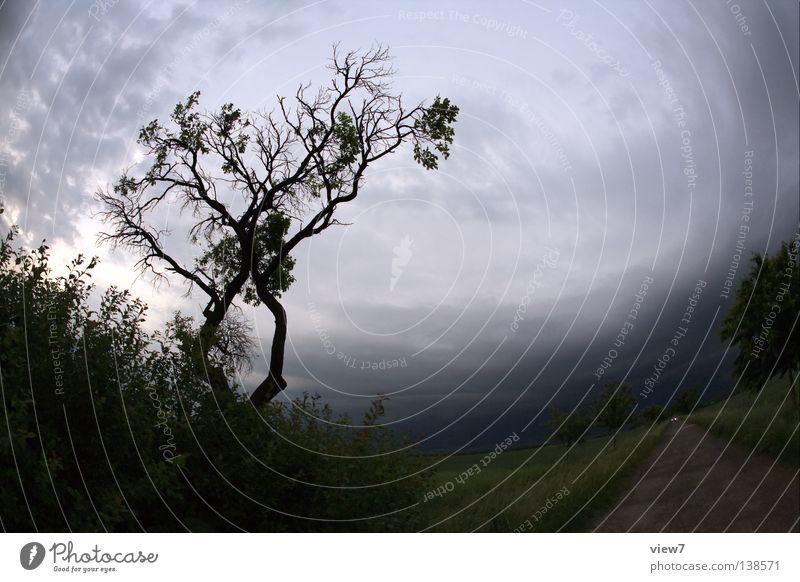 Heimfahrt Natur schön Baum Sommer Blatt Wolken Ferne dunkel Wiese Gefühle Traurigkeit Wege & Pfade PKW Regen Feld Wind