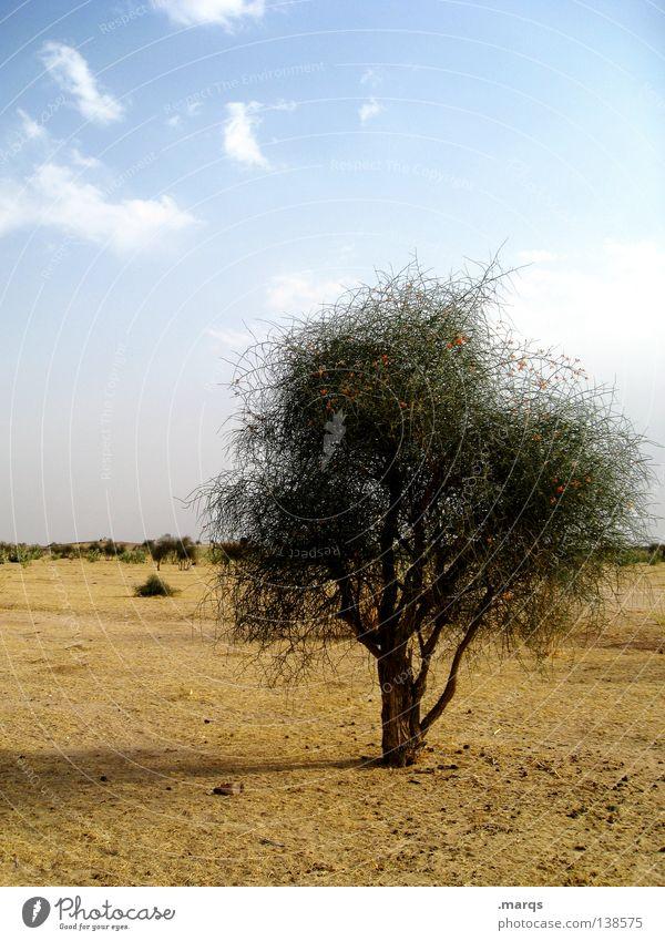 Einsamkeit Wachstum Überleben Sommer Steppe Baum Pflanze Physik heiß trocken einzeln Horizont Sträucher Indien Leben Klimawandel Wüste Ferne Wärme Single