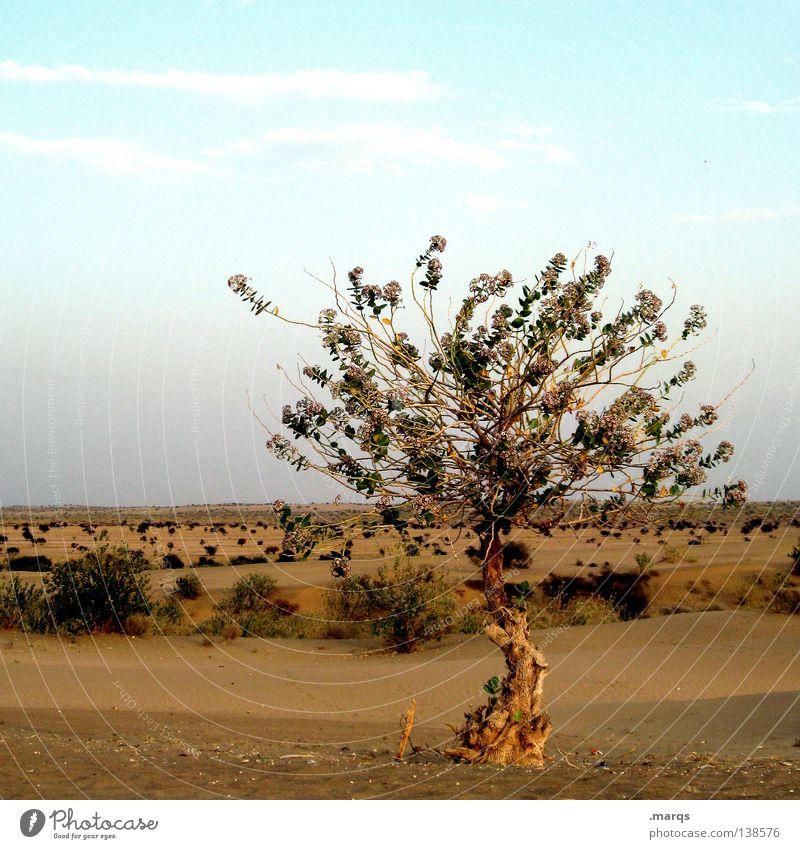 Erkenntnis Wachstum Überleben Sommer Steppe Baum Pflanze Physik heiß trocken Einsamkeit einzeln Horizont Sträucher Indien Leben Klimawandel Wüste Ferne Wärme