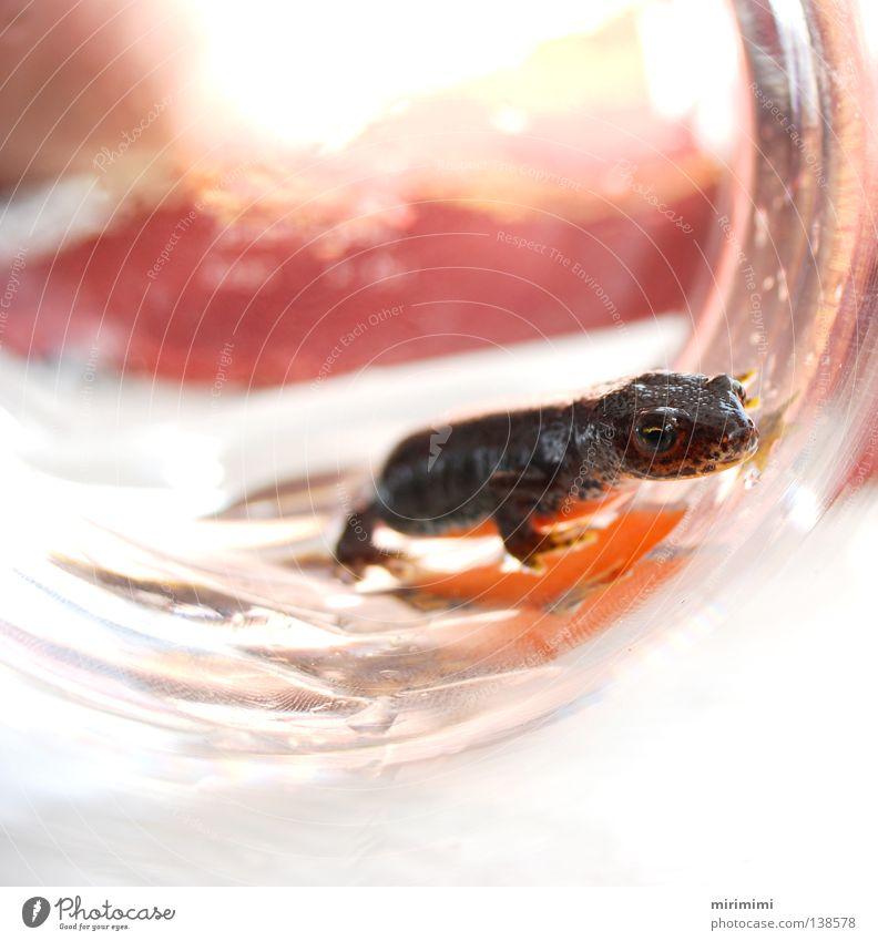 molchi die 4. Molch Lurch Vase Muster Sommer Wasser orange