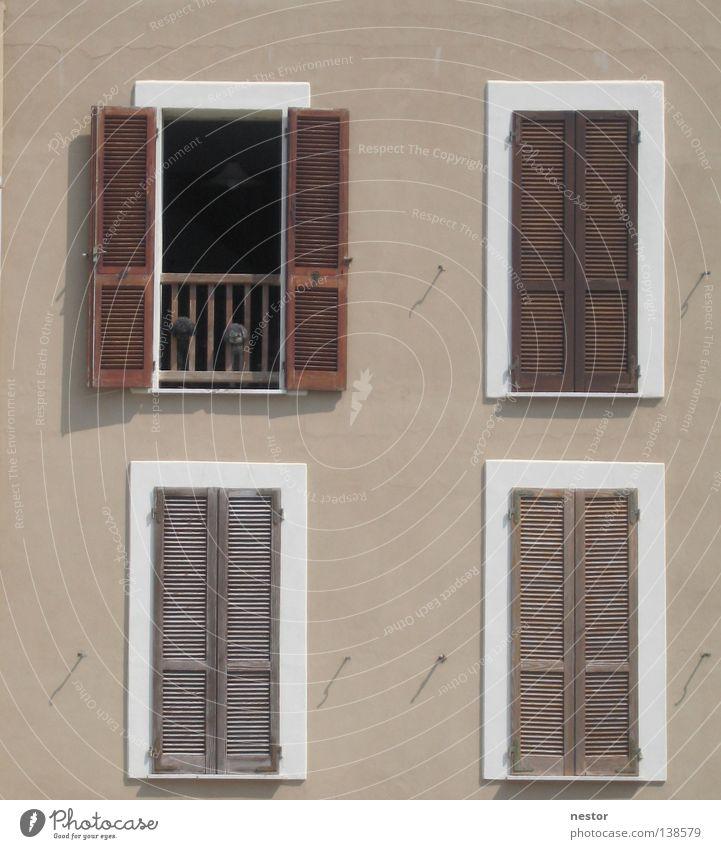 Hundspanorama Sommer Haus Fenster Hund Fassade Sardinien