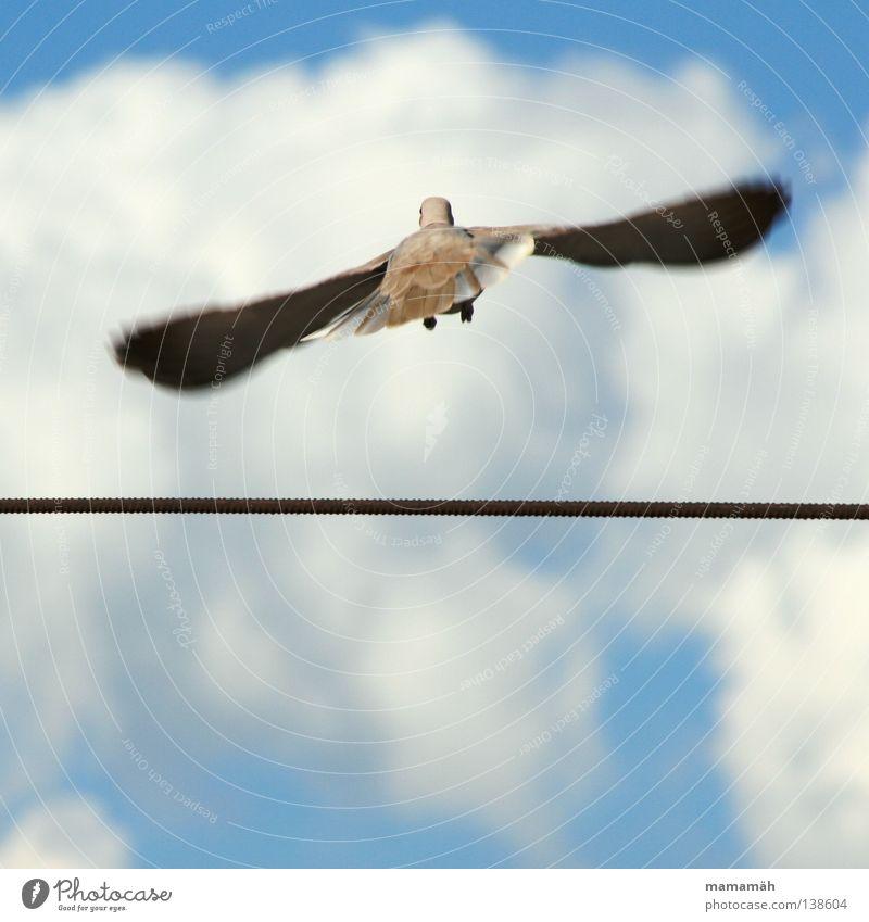 Die Taube auf dem Drahtseil! Teil 2 Farbfoto Außenaufnahme Tag Bewegungsunschärfe Seil Luft Himmel Wolken Schönes Wetter Tier Vogel Flügel fliegen Unendlichkeit