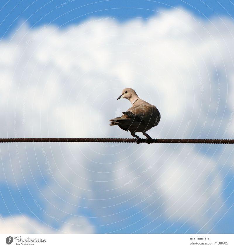 Die Taube auf dem Drahtseil! Teil 1 Himmel Wolken Tier Denken Luft Vogel warten Seil sitzen Feder Flügel festhalten Schnabel