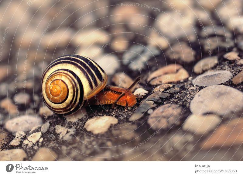 """...""""ich bleibe lieber single"""" Natur Einsamkeit Tier Bewegung Häusliches Leben Wildtier wandern Geschwindigkeit rennen Schnecke Single langsam Weichtier"""