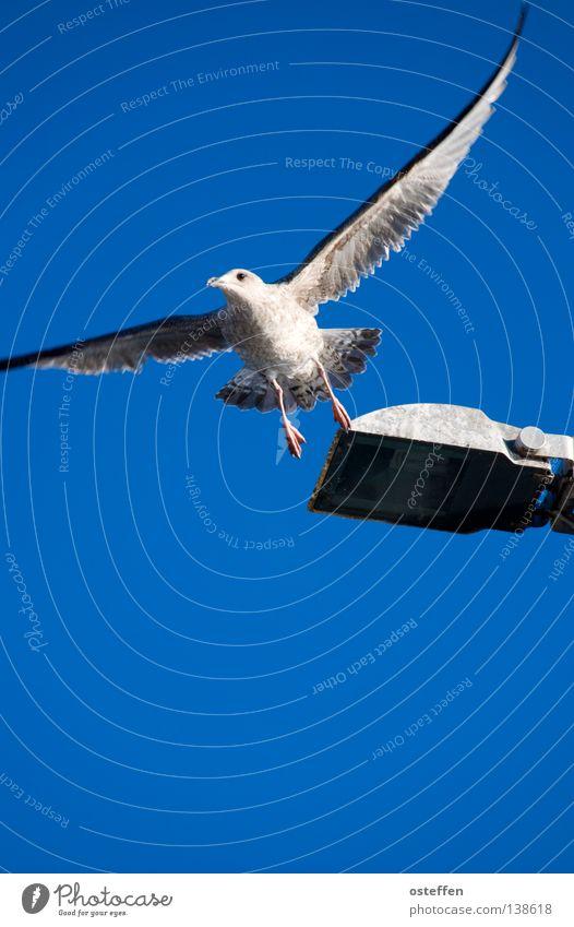 abflug Himmel weiß Meer blau Ferien & Urlaub & Reisen Tier Lampe Vogel fliegen frei Luftverkehr Laterne Möwe Abheben maritim Travemünde