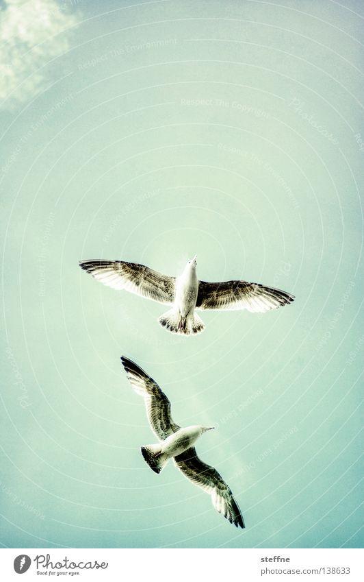 JOGI MÖW Möwe Luft Segeln Wolken Vogel Himmel fliegen frei Luftverkehr durch die Lüfte Wolke 7 wolke sieben Glück Freude Freiheit Erfolg