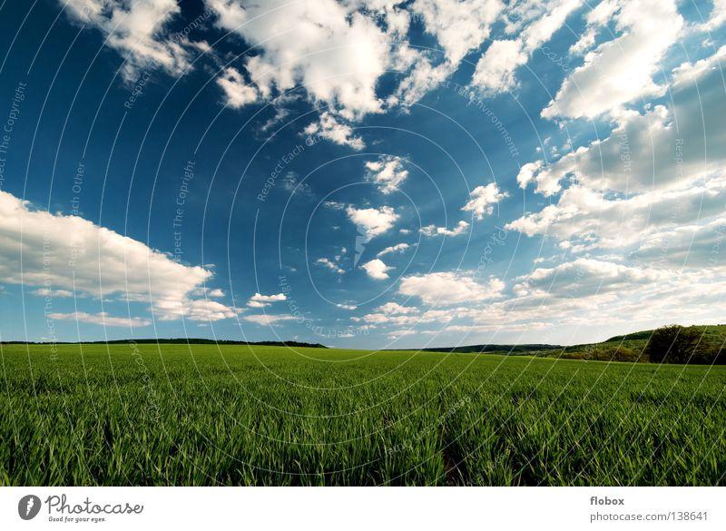 It's a beautiful day! Natur grün Sommer Ferne Landschaft Feld Schönes Wetter Wolken Ackerbau himmelblau Wolkenhimmel Wolkenformation Wolkenfeld
