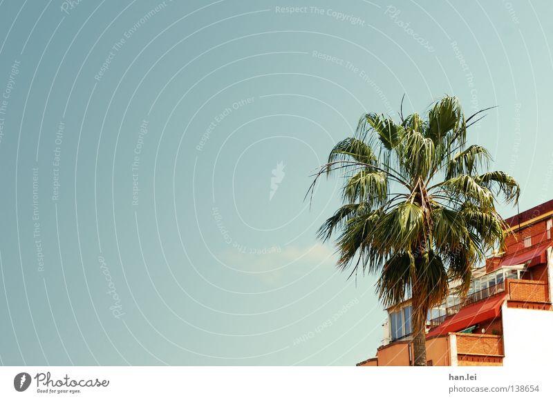 Barcelonische Palme Himmel blau Baum Sommer Blatt Haus Dach Schönes Wetter Spanien Barcelona Blauer Himmel mediterran Süden Zweige u. Äste Palmenwedel