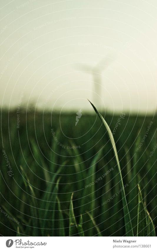 Grashalm Halm Wiese grün Feld Unschärfe Sommer Windkraftanlage Himmel