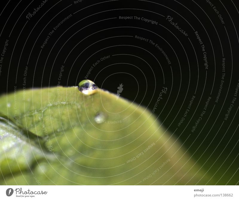 drop MMMMCMXCIX nah Makroaufnahme nass feucht Wassertropfen Regen glänzend Unschärfe rund Klarheit dunkel Reflexion & Spiegelung grün Natur Nahaufnahme
