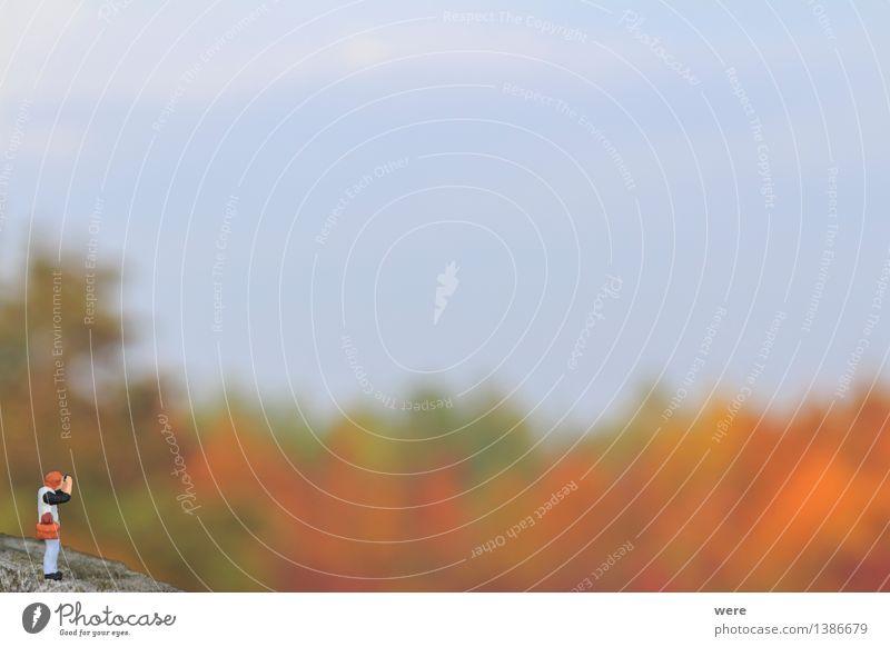 Landschaftsfotograf Natur Pflanze Baum Blatt Wald Herbst beobachten Bild Umweltschutz Fotografieren Herbstfärbung Biotop