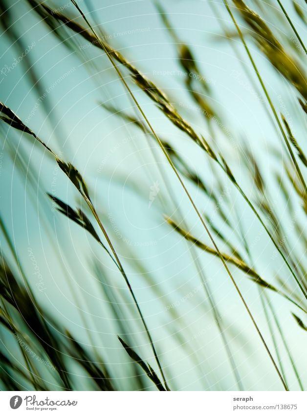 Grasland Schilfrohr Röhricht Biotop Binsen Halm grün durcheinander ökologisch Pflanze Wiese diagonal quer Unschärfe Ähren Umwelt Umweltschutz Süßgras