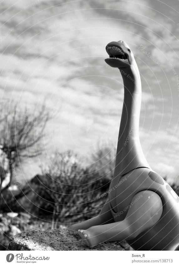 Der Brüller Himmel Tier Macht schreien Größe Dinosaurier Pflanzenfresser