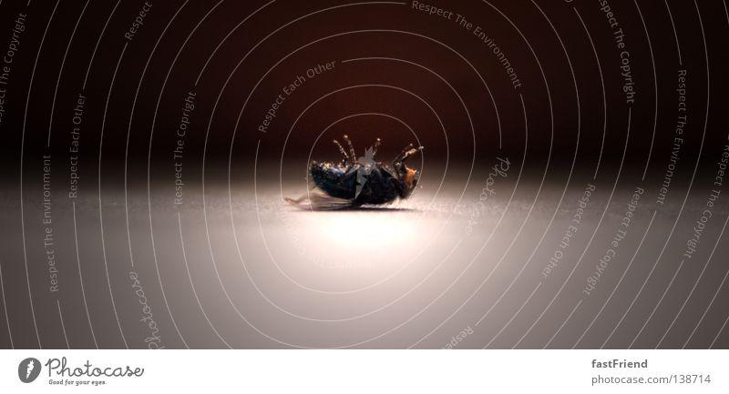 Todesursache: unbekannt Licht Insekt kalt frei bewegungslos Vergänglichkeit Fliege Flügel Beine aufbahren aufgebahrt vorbereitet Rücken Regung zappeln Mord