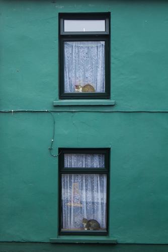 Nachmacher Haus Mauer Wand Fenster Tier Haustier Katze 2 warten ästhetisch grün schwarz weiß Reichtum Zufall Symmetrie Farbfoto Außenaufnahme Menschenleer