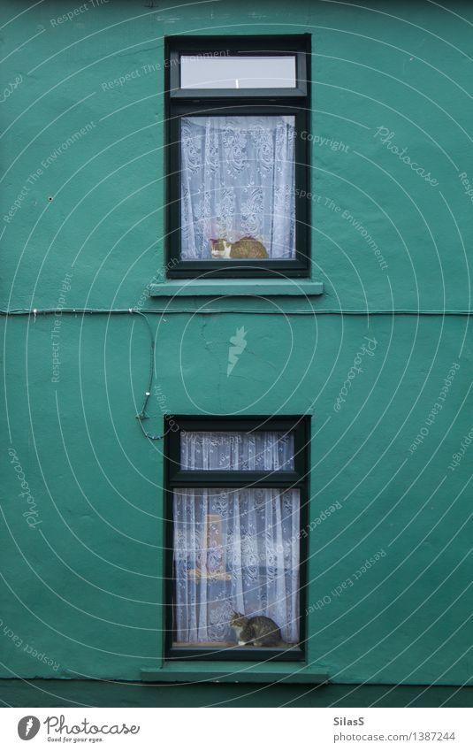 Nachmacher Katze grün weiß Haus Tier Fenster schwarz Wand Mauer ästhetisch warten Haustier Reichtum Symmetrie Zufall