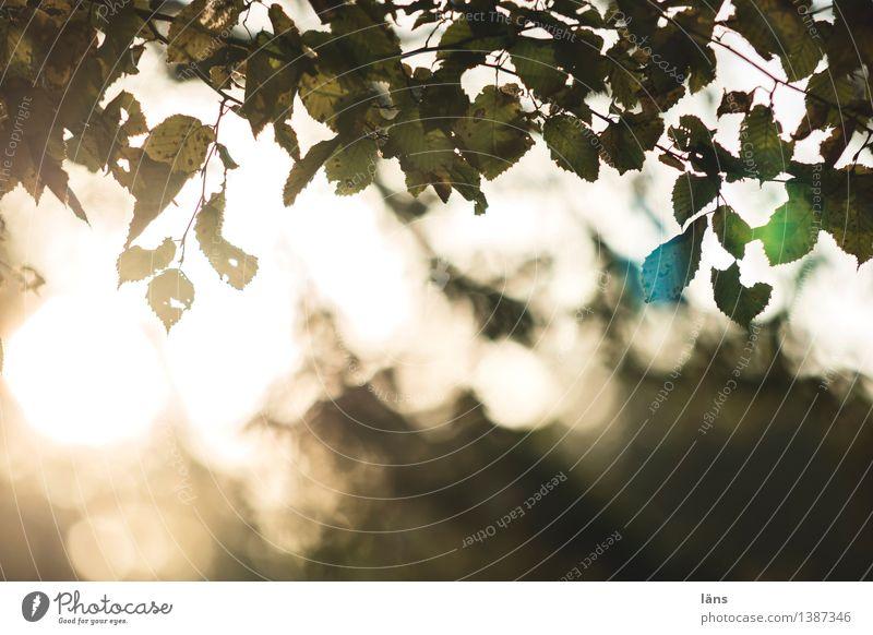 pZ4 l gegenlicht Natur Landschaft Pflanze Baum Blatt Wald Vergänglichkeit Wandel & Veränderung Außenaufnahme Menschenleer Reflexion & Spiegelung
