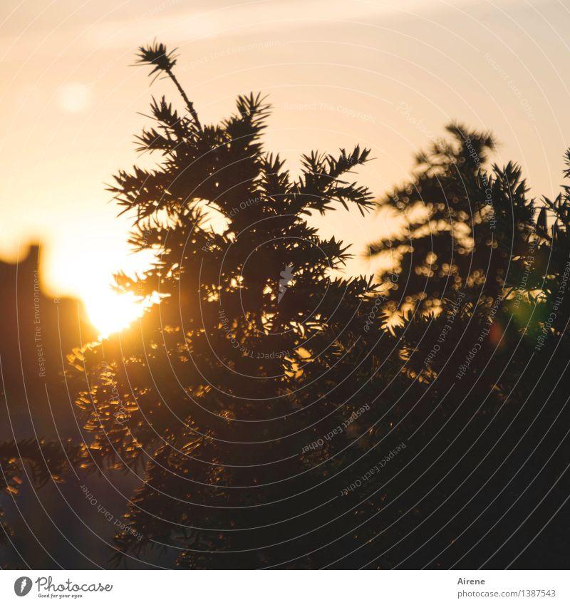 0815 AST   der Tag geht Himmel Natur Pflanze schön Sommer Baum Sonne dunkel schwarz Gefühle Glück braun Stimmung orange träumen glänzend