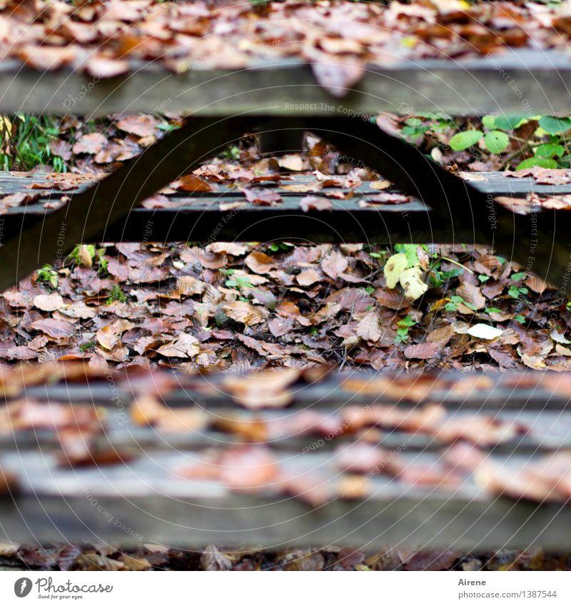A wie Aus und Vorbei Picknick wandern Tisch Bank Biergarten Herbst Herbstlaub Holz Schriftzeichen alt fallen sitzen nass natürlich trist braun schwarz