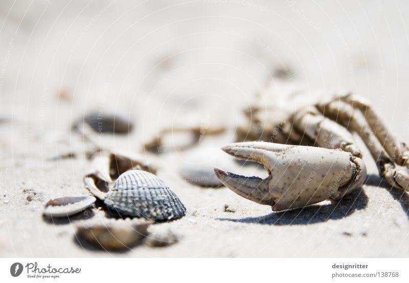 in Schönheit sterben Meer Strand Ferien & Urlaub & Reisen Tier Leben Spielen Tod See Sand Beine Fisch Freizeit & Hobby Sammlung Muschel Nordsee Erinnerung