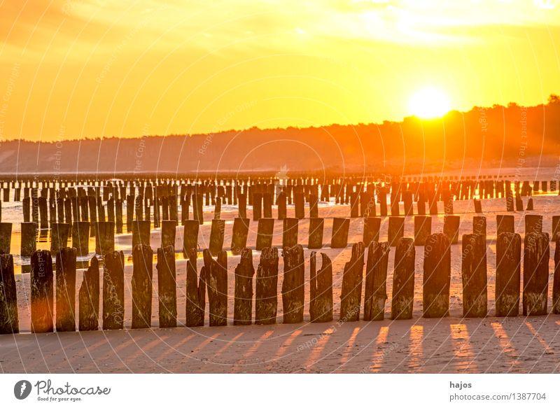 Sonnenaufgang an der Ostsee mit Buhnen Freizeit & Hobby Ferien & Urlaub & Reisen Strand Meer Natur Wasser alt dunkel hell historisch gelb rosa rot schwarz