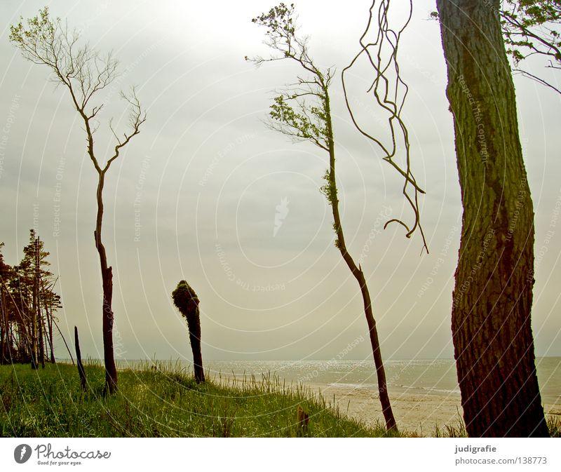 Weststrand Strand Darß Küste Umwelt Baum Buche Wiese Gras Meer ruhig Licht Gegenlicht Sehnsucht Fernweh Einsamkeit Menschenleer Farbe Sommer fischland-darß