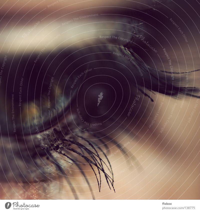 Aufwachen Pupille Wimpern Mensch Sinnesorgane Schminke geschminkt Wimperntusche Lidschatten Frau feminin schön Kosmetik betonen Kajal Jugendliche verbinden